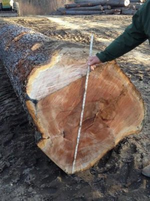 Large diameter cherry log